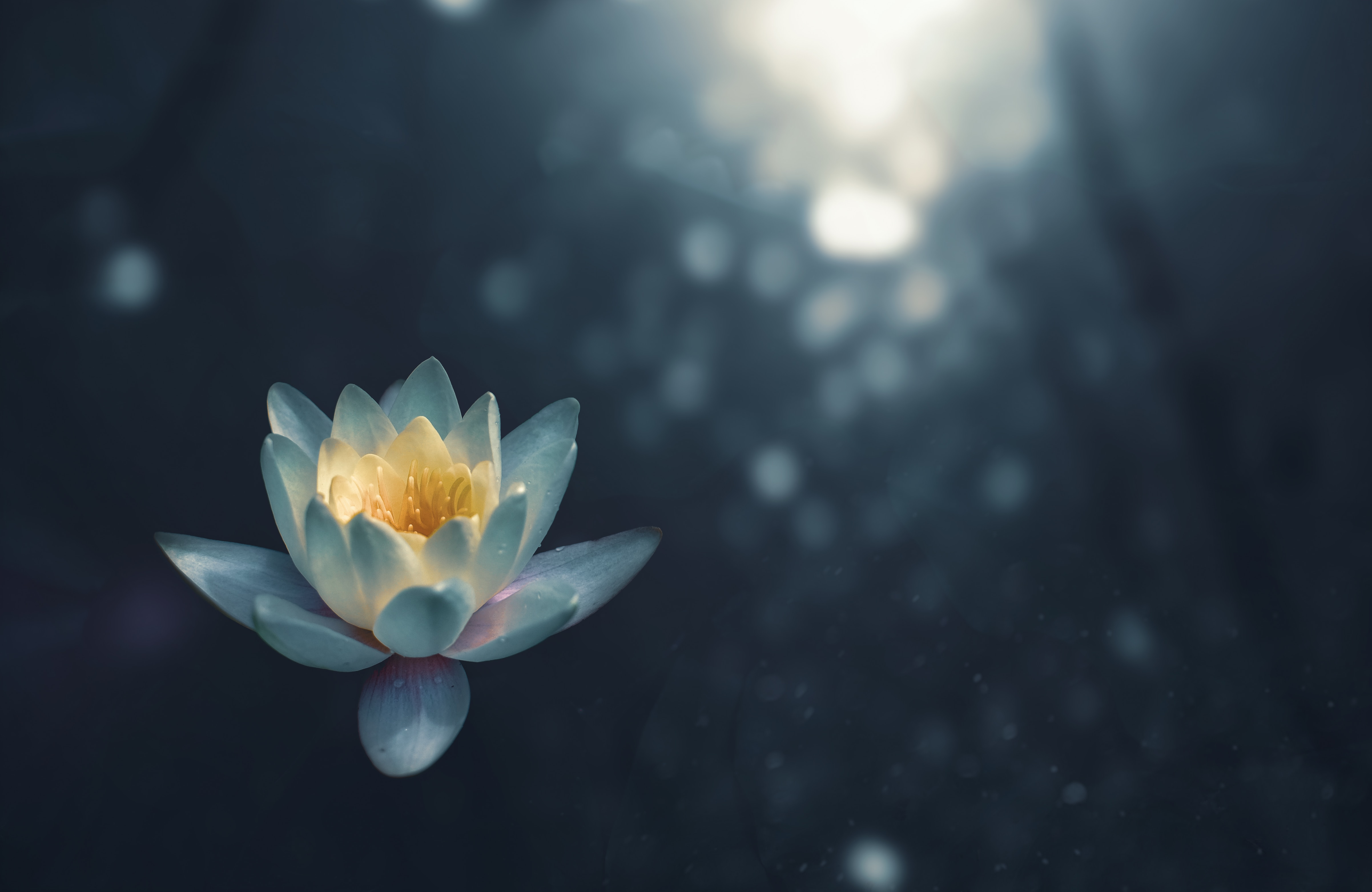 Lotus Flower - Meditation