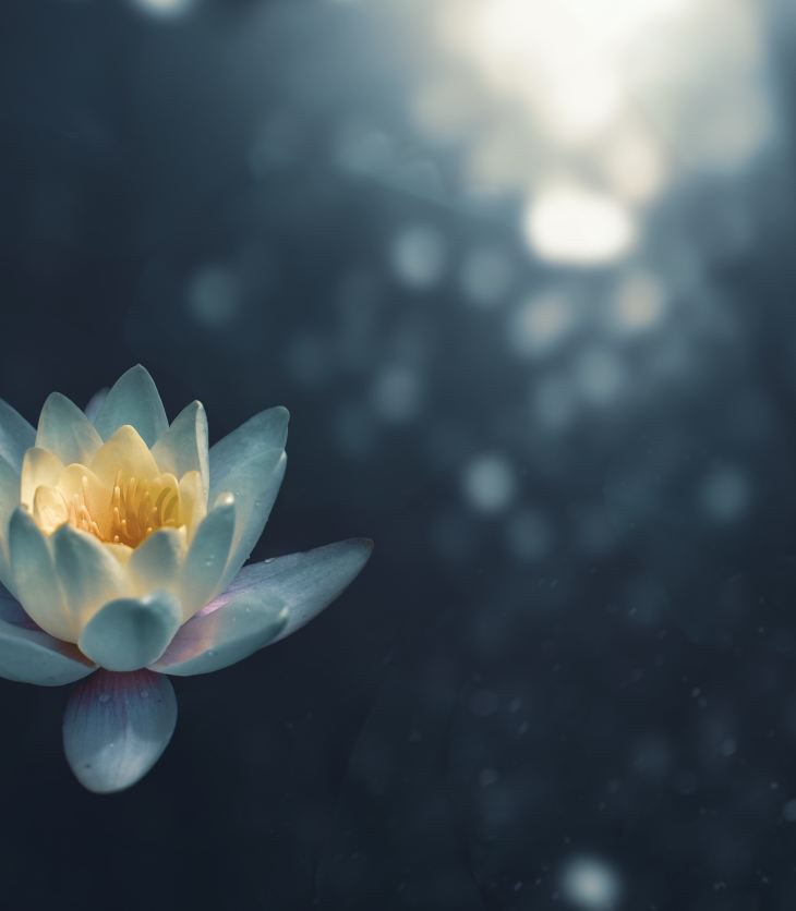 Lotus Flower - Meditation